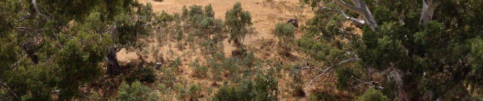 Restoring Vegetation