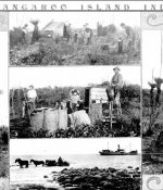 Old photo of men harvesting Yacca gum